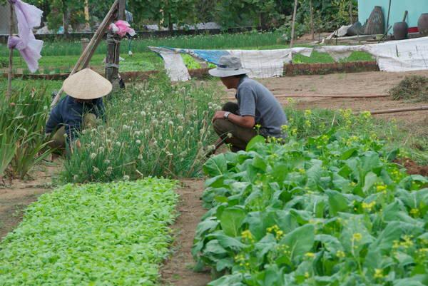 068-Vietnam-Hoi An