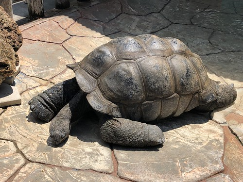 100 year-old Dean the tortoise. From 5 Family-Friendly Eco Destinations in Kissimmee, Florida