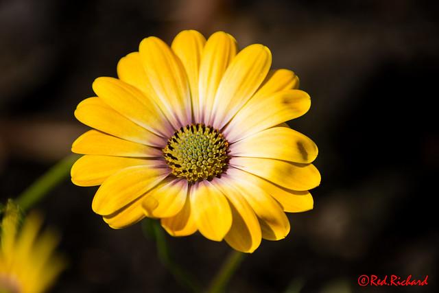 Garden Flower 2 (J7)