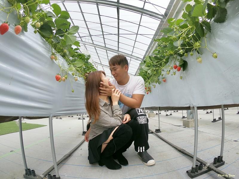 日本沖繩自由行採草莓吃到飽GPTempDownload 8