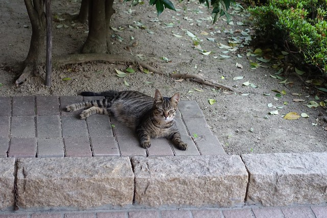Today's Cat@2019-05-27