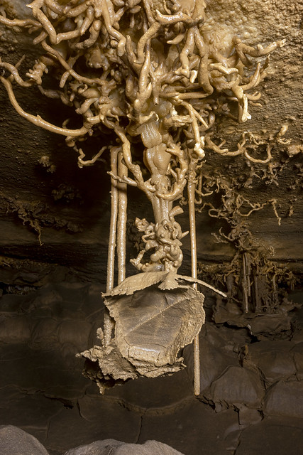 Helictites, Gourdneck Cave, Gourdneck Cave Preserve, Marion County, Tennessee 2