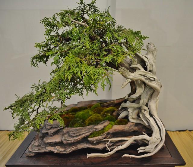 Spring Bonsai Show, Toronto Bonsai Society, Toronto Botanical Garden, Toronto, ON