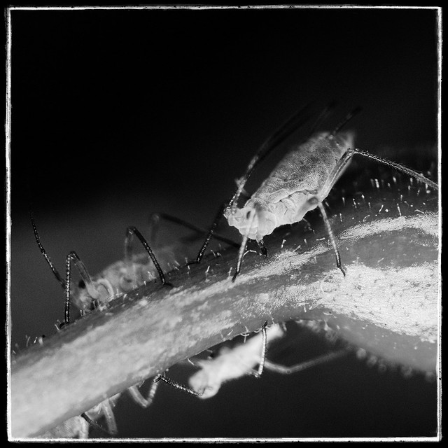 Wee bugs
