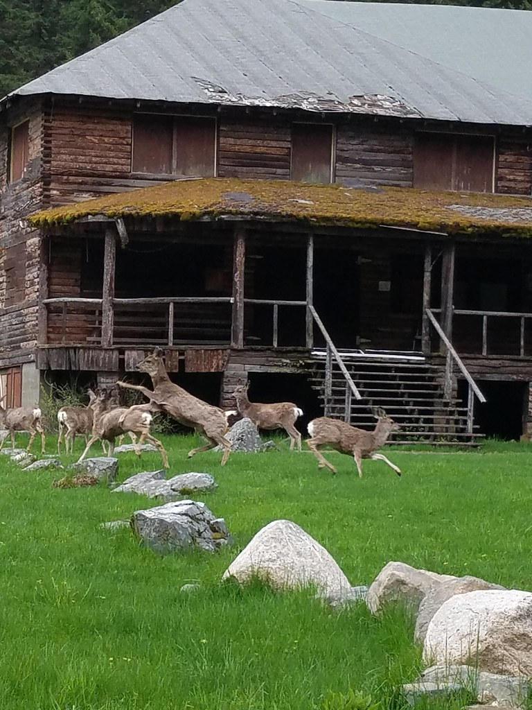 Deer in front of the Edelweiss Inn