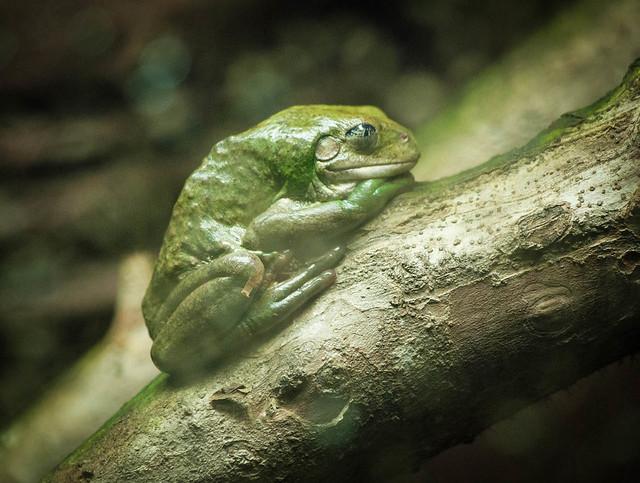 Frog Nap