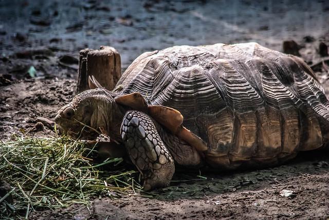 Tortoise Crawl