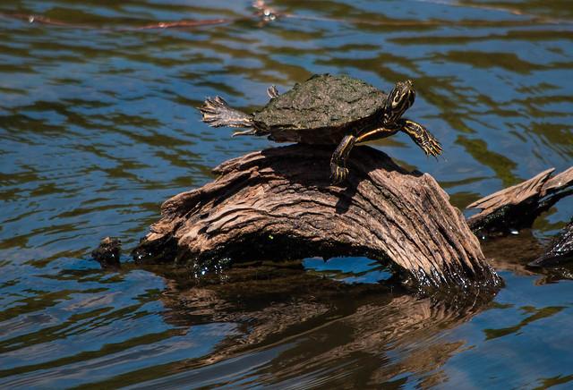 Turtle Yoga?