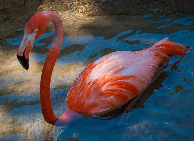 Floating Flamingo