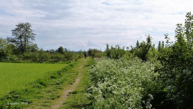 De Groene Grens - Nieuw natuurgebied tussen Veenendaal en Ede (3)