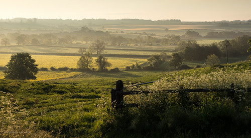 dawn early local sunsrise toniphotoxoncouk cherwellvalley oxfordshire somerton upperheyford middleaston misty farmland fields trees golden yellow nature natural beauty mellow warm bask glow cowparsley fences canola rapeseed earlymorning sleepy countryside rural