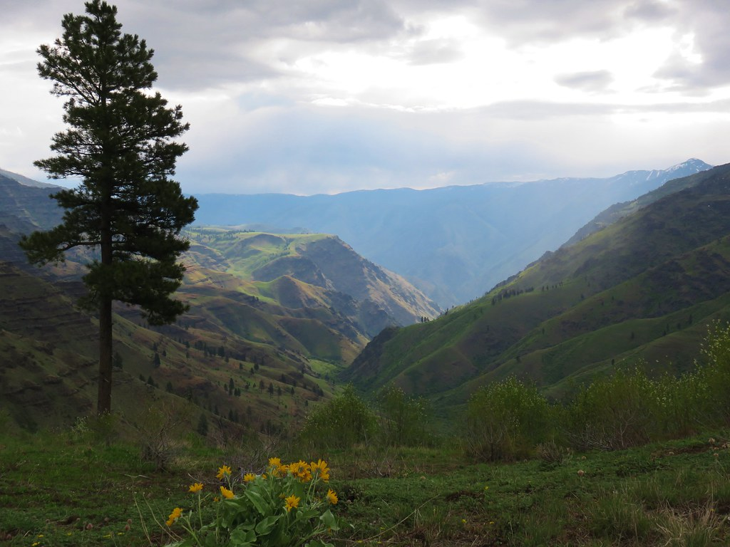 Looking into Hells Canyon from the Summit Ridge Trail