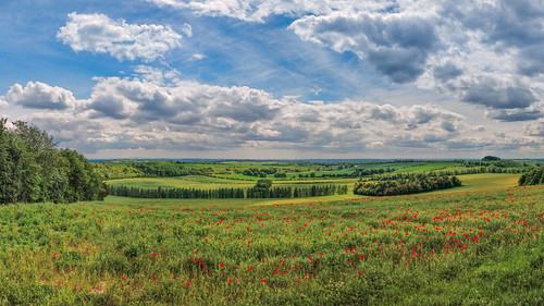 hampshire winchester poppies redpoppies fieldofpoppies cloudscape trees springfields sunnyday goldenscene redflowers beautifulscene landscapehunter greatoutdoors southdownsway southdowns landscape englishcountryside photosofbritain explorebritain countrysidewalk landscapelovers