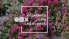 Volvemos con las flores.