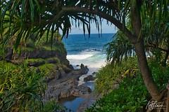 Ocean through the Jungle