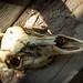 05262019_memorialdaycamping_skull-0393