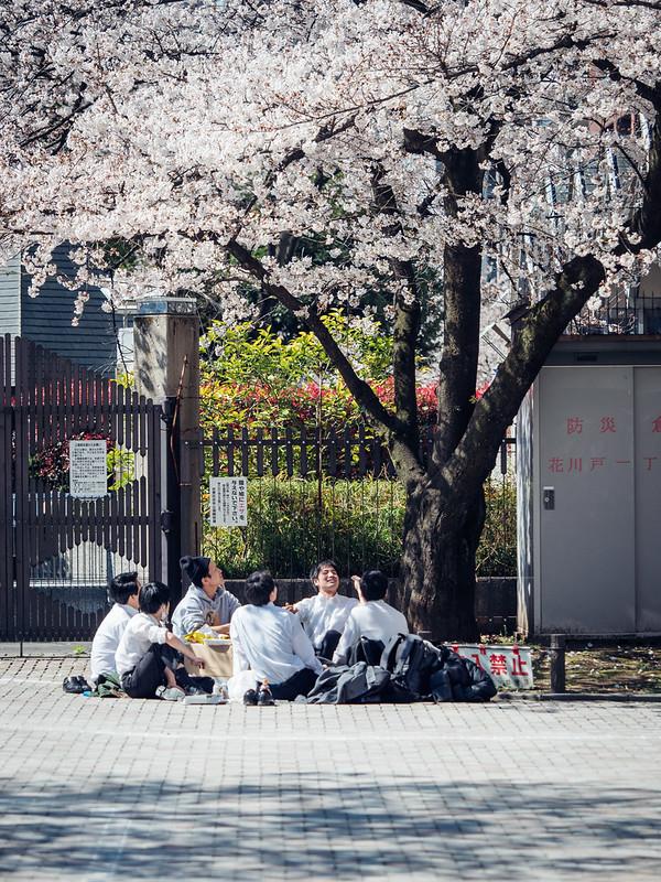 隅田川公園|Tokyo
