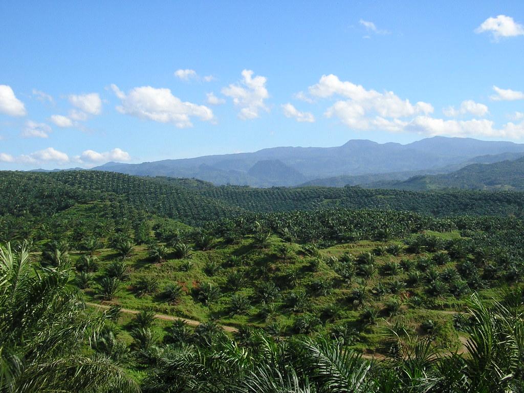 棕櫚油種植是馬來西亞及印尼雨林消失的罪魁禍首。圖片來源:Achmad Rabin Taim(CC BY 2.0)