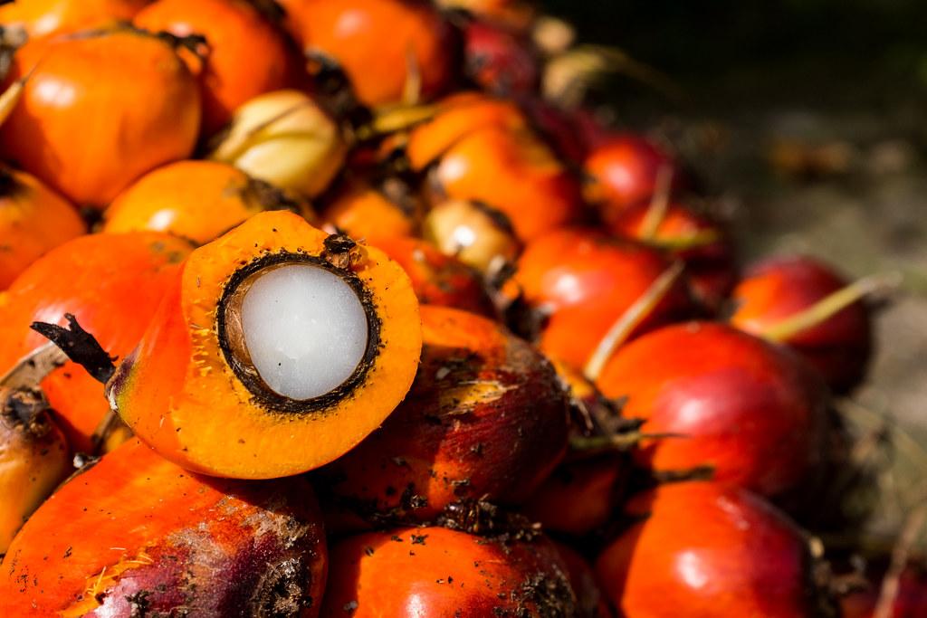 森林風險產品之一的棕櫚油。圖片來源:Nanang Sujana/CIFOR(CC BY-NC-ND 2.0)