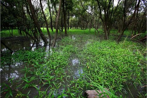 EAAF143 Janghang Wetland