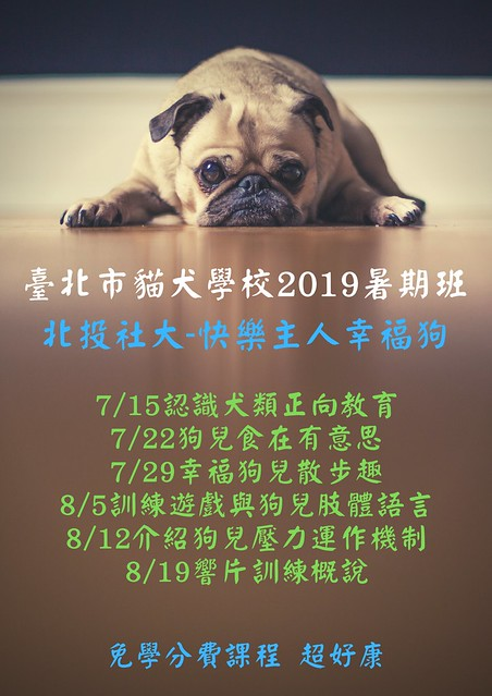 臺北市貓犬學校暑期班