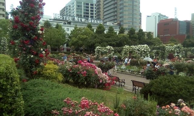 Roses garden in Yokohama
