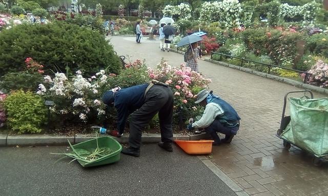 Rose Garden, Yokohama