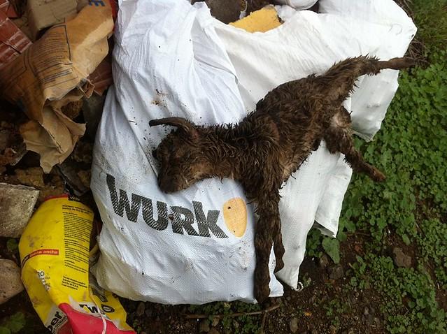 Maltrato animal en los barrancos de Canarias