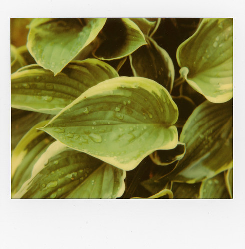 Hosta | by @necDOT
