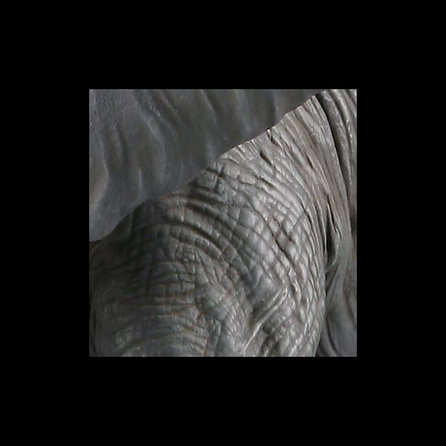 海洋堂 MEGA SOFUBI ADVANCE 「非洲草原象 redeco版本」!メガソフビアドバンス MSA-018 アフリカゾウ リデコ版