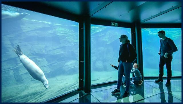 Le rêve est l'aquarium de la nuit