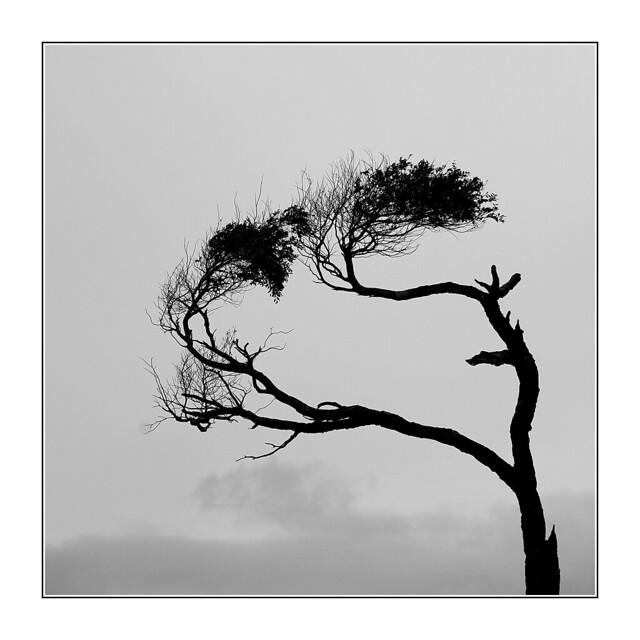 Dur dur de résister au vent