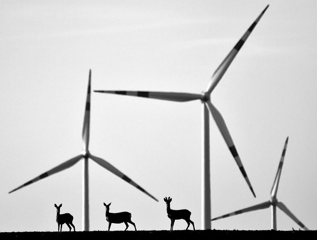 [45] 'Co-existence' by Istvan Kerekes; Category: Sustainable energy (© Istvan Kerekes, Sustainably Yours /EEA)