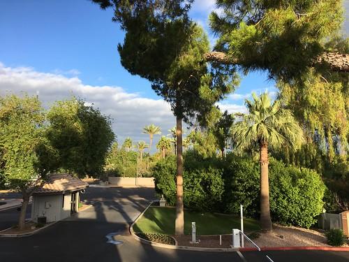 phoenix arizona trees palms magichour htmt iphone