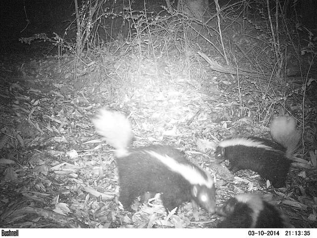 Cámaras trampa: investigando la fauna con tecnología