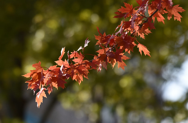 L'automne aux berges du Fleuve Saint-Laurent