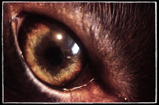 Eli Eye