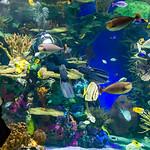 Plenty 'o Fish