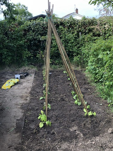 Veg Patch 2019