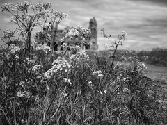 Whitby Abbey from the meadow