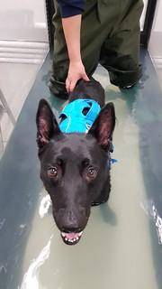 Toivo on the underwater treadmill