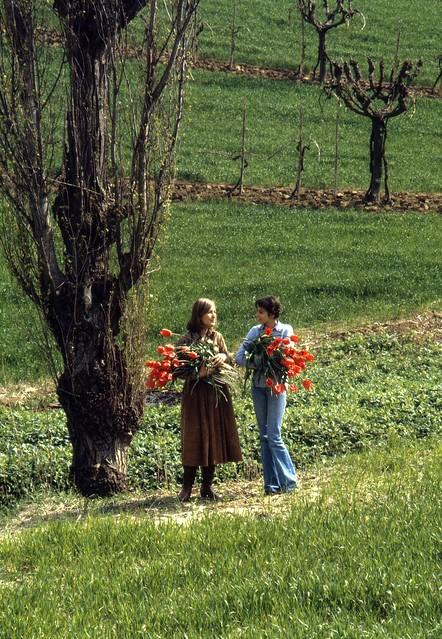 Le ragazze e i fiori rossi (marzo 1979)