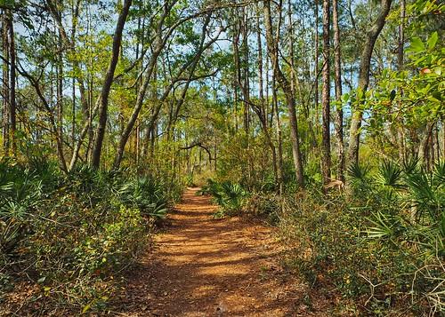 florida newportrichey unitedstates woodlands wood tree trees landscape park nature naturereserve path