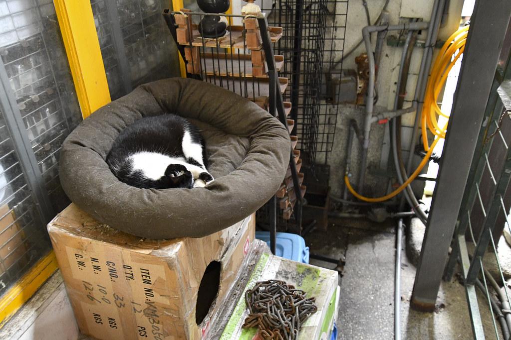 Houtong TAIWAN Cat Village
