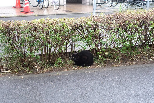 Today's Cat@2019-05-28