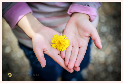 a dandelion in the palm of gils's hands