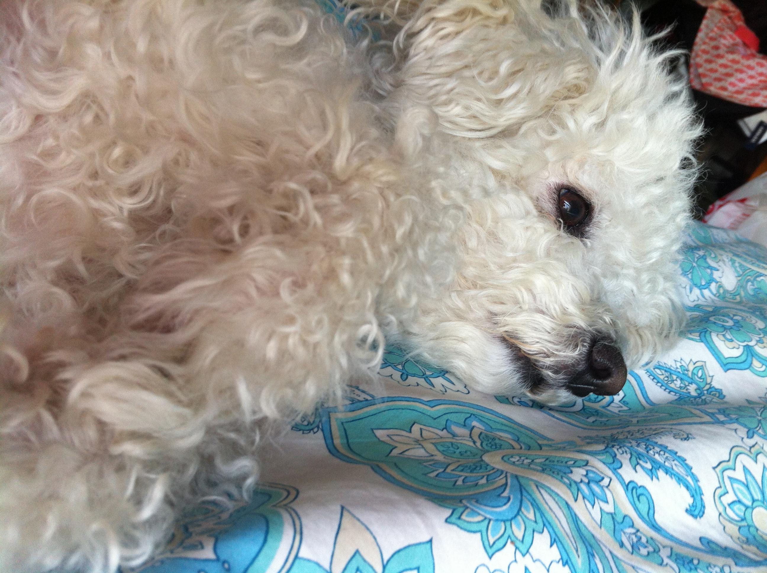 Morning Chloe