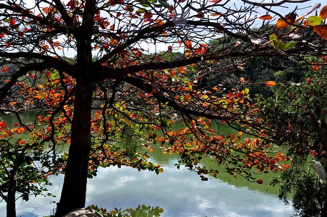 Garça (consegue vê-la?) & Outono