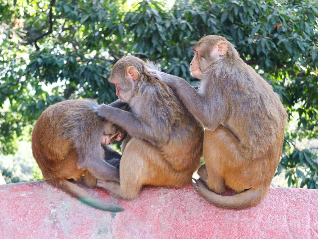 Visita al templo de los monos de Katmandú