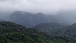 Atlantic Forest / Mata Atlântica